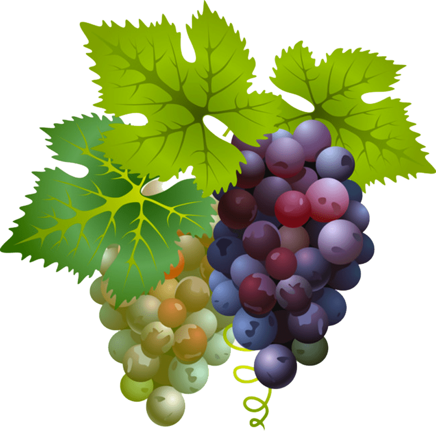 racimos-de-uva